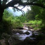 重庆石柱黄水国家森林公园