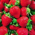 攀枝花中坝草莓