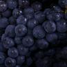 秋季食疗养生吃葡萄 紫葡萄预防衰老
